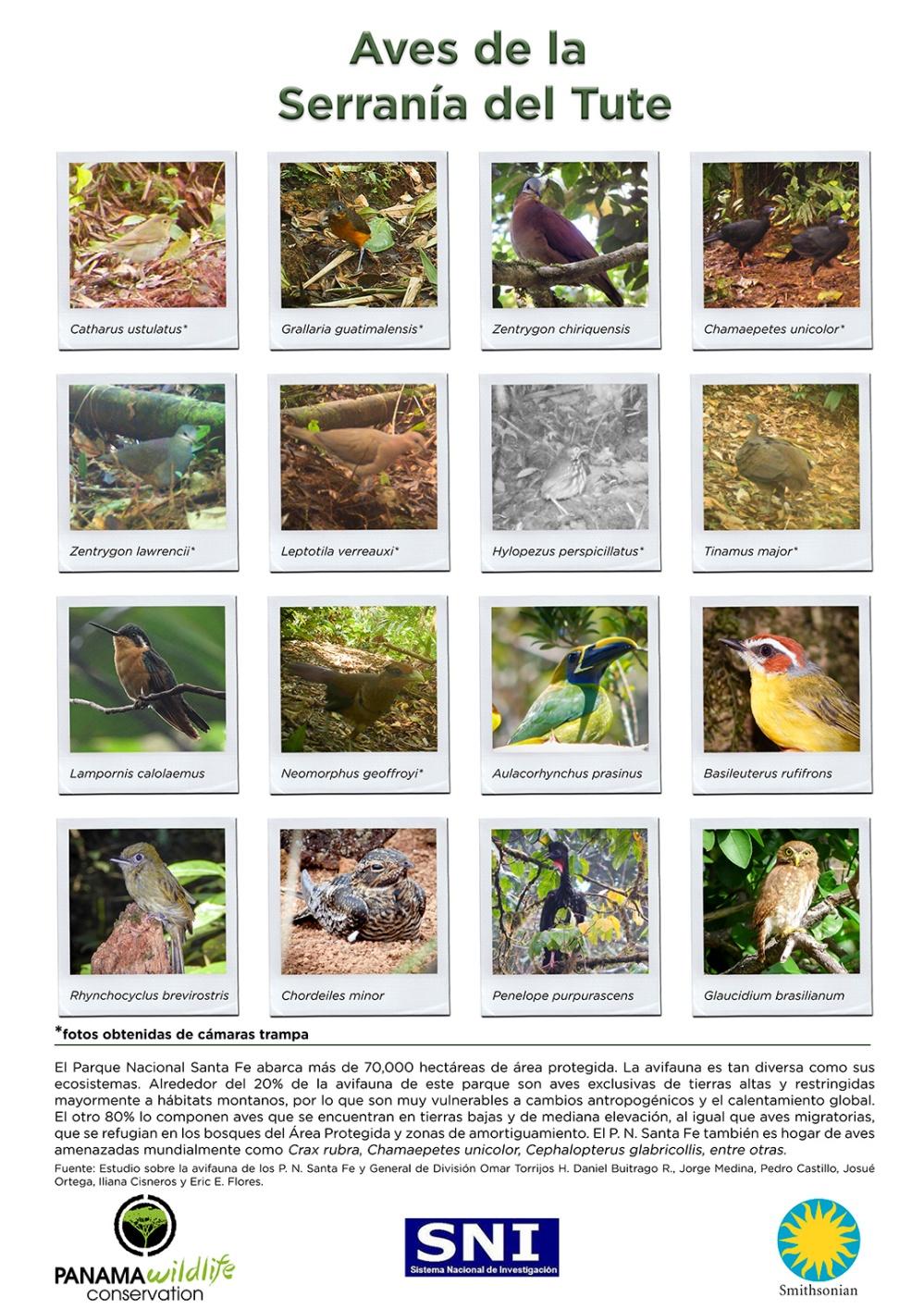 Puede ver e imprimir el poster en mayor resolución en este enlace: http://www.stri.si.edu/images/media/Aves_PN_SantaFe.jpg